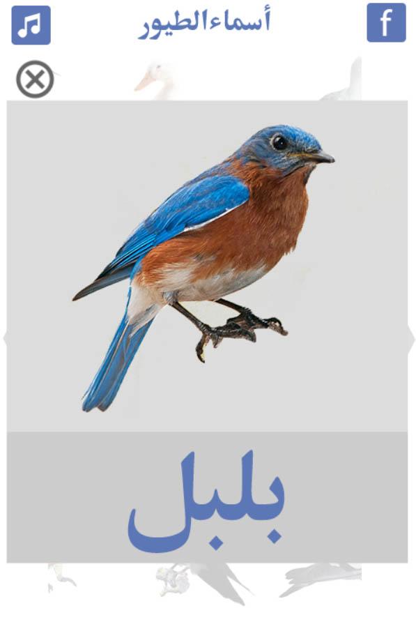 تعليم-أسماء-الطيور-بلبل
