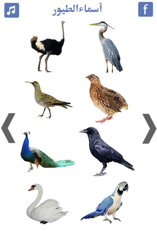 تعليم أسماء الطيور فلاش توونز تطبيق أندرويد رووووعة للأطفال يعلم بالصوت والصورة ويشجع الطفل على التعلم والتفاعل