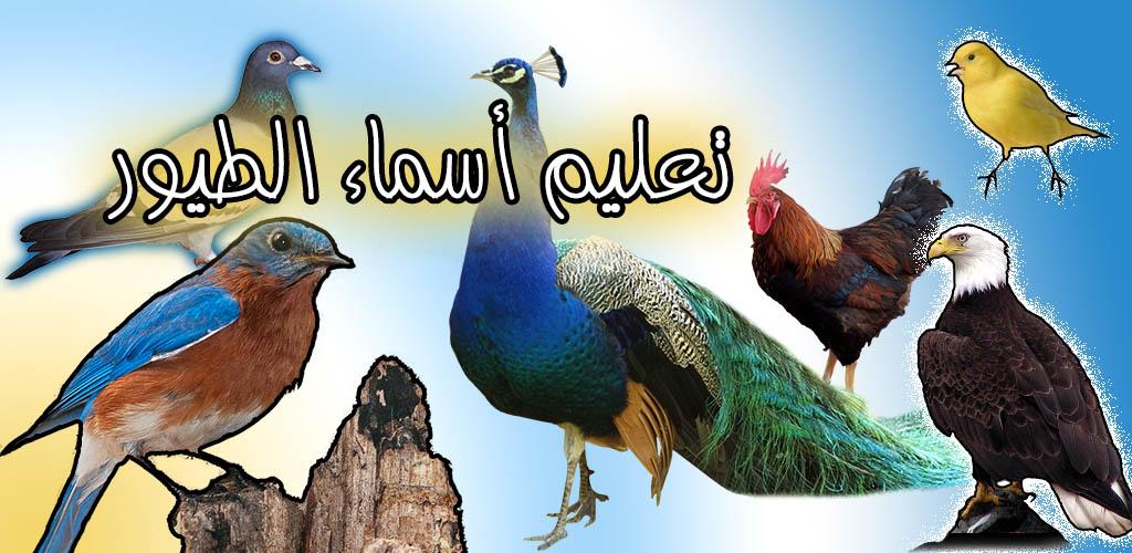 تعليم-أسماء-الطيور