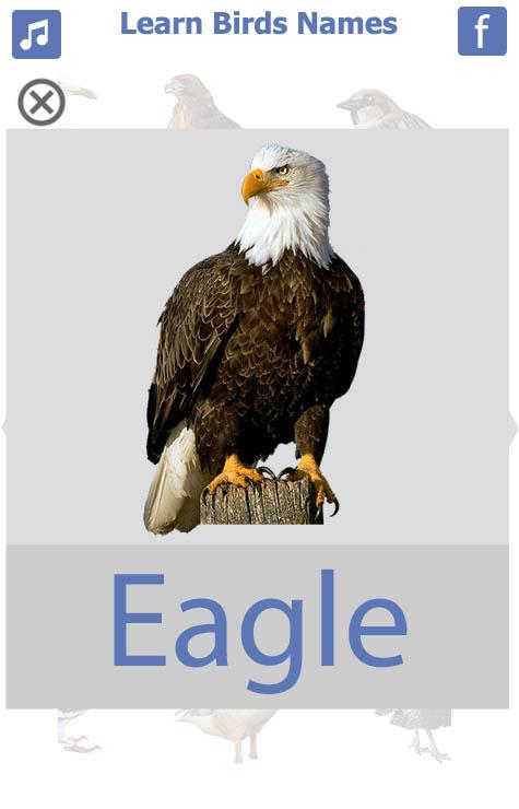 اسماء-الطيور-انجليزي-7