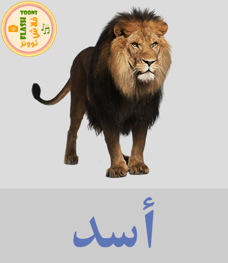 اصوات الحيوانات للاطفال - اسد