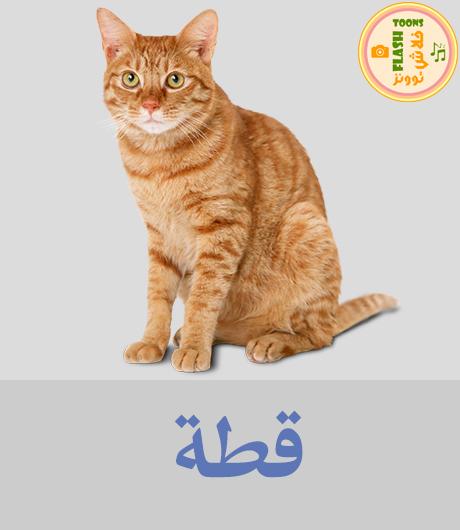 اصوات الحيوانات للاطفال - قطة