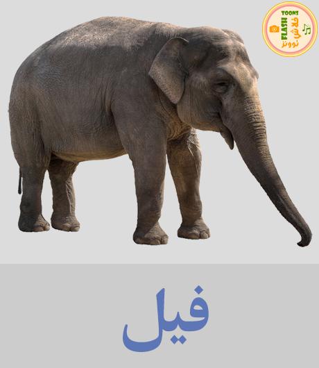 اصوات الحيوانات للاطفال - فيل