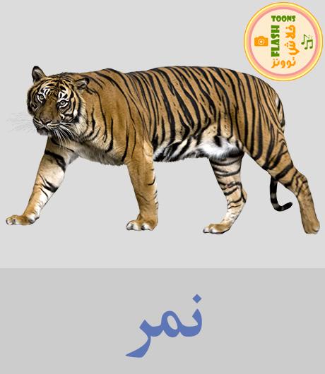 اصوات الحيوانات للاطفال - نمر