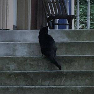 creepy cat pic