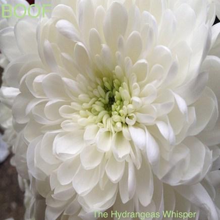 92. Boof - The Hydrangea's Whisper