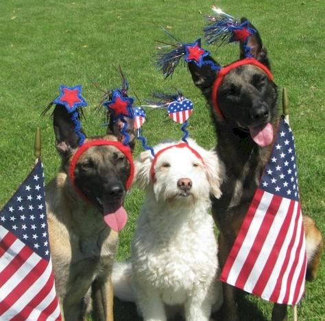 Patriotic Pets Ecards For Facebook