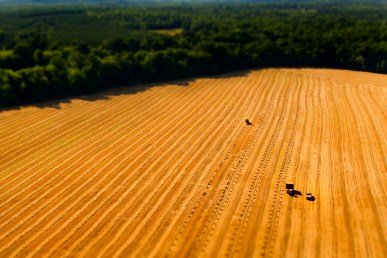 Combines work to harvest and bail hay in a field near rural Lancaster, SC, just south of Charlotte, Tuesday, July 1, 2008. (© 2008, Brett Flashnick/ flashnick   visuals)
