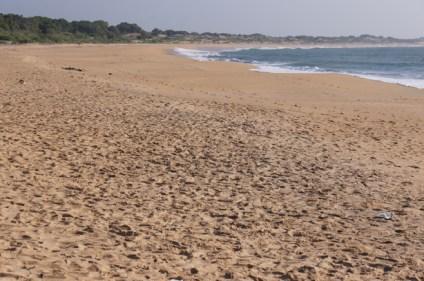 Yala beach