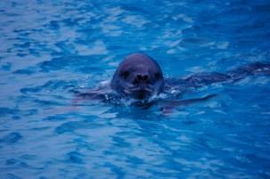 Leopard Seal
