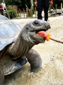 Tortoise Singapore Zoo
