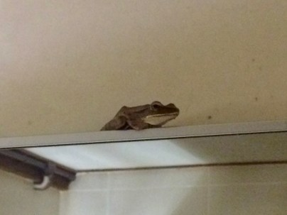 Frog coming through the cracks