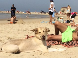Dog (Julie) relaxing with her owner on Yom Kippur