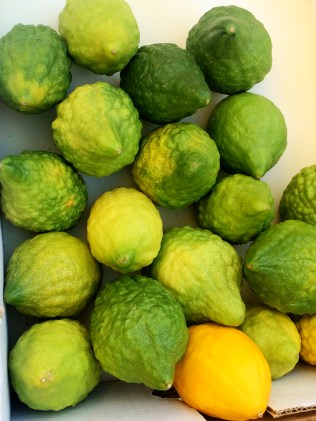 Citron Israeli lemon