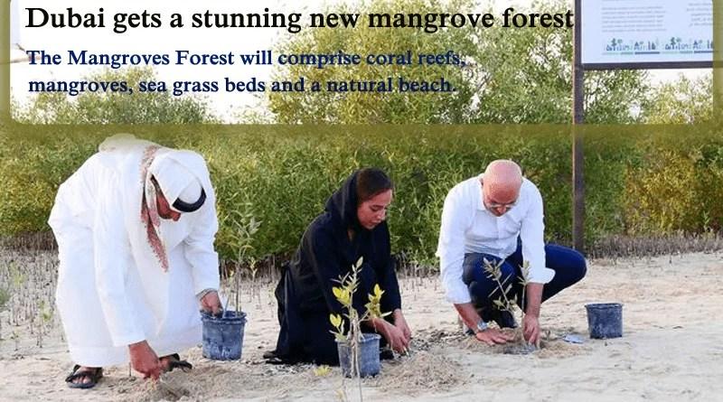 Dubai Mangrove Forest : The City Gets a Stunning New Mangrove Forest