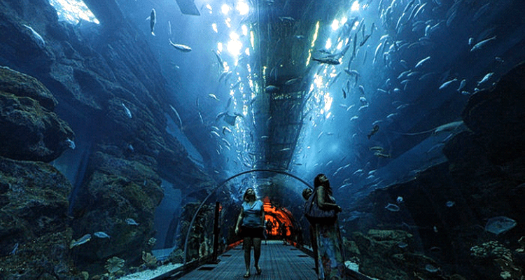 Dubai Mall Aquarium & Underwater Zoo