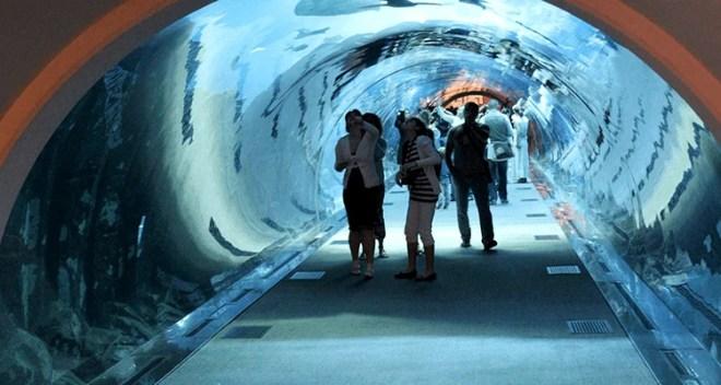Dubai Aquarium and Underwater Zoo