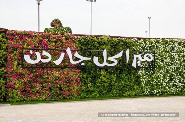 Dubai Miracle Garden 27