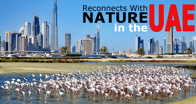 Reconnect with Nature in the UAE: The Goal Which is Easy to Accomplish