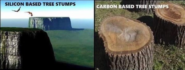 GIANT TREES BEFORE THE FLOOD! No Trees on Flat Earth