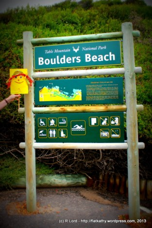 We visit Boulders Beach and walk along the boardwalk