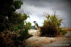Goodbye, Mr Penguin!