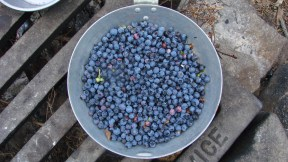 The picked fruits of nature. Later we ate them