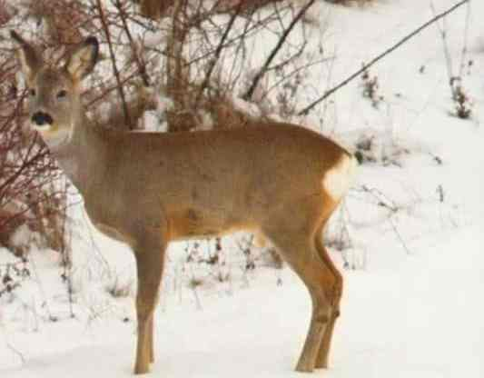 101-year old grandma kills two deer with one shot: 'They both dropped right there'