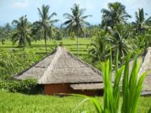 Ubud Countryside