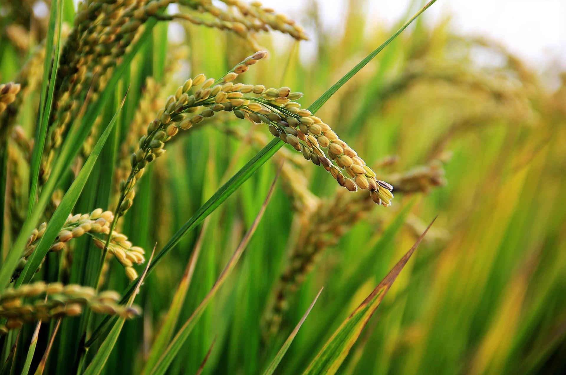 Audiência Pública sobre o arroz