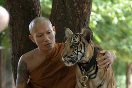 Monge no Tiger Temple