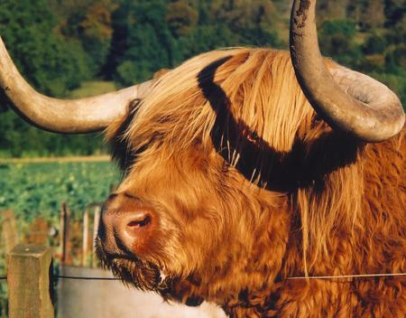 Hamish, interior escocês