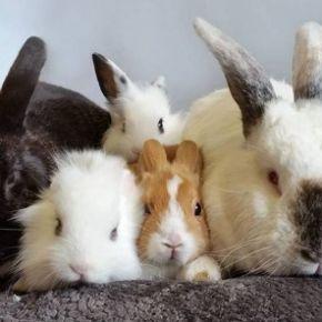 Image: Bunny Blossom / Facebook