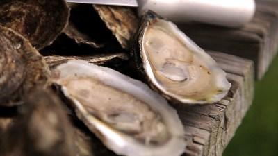 Carolina Mariculture | Cedar Island, NC : Flavor, NC