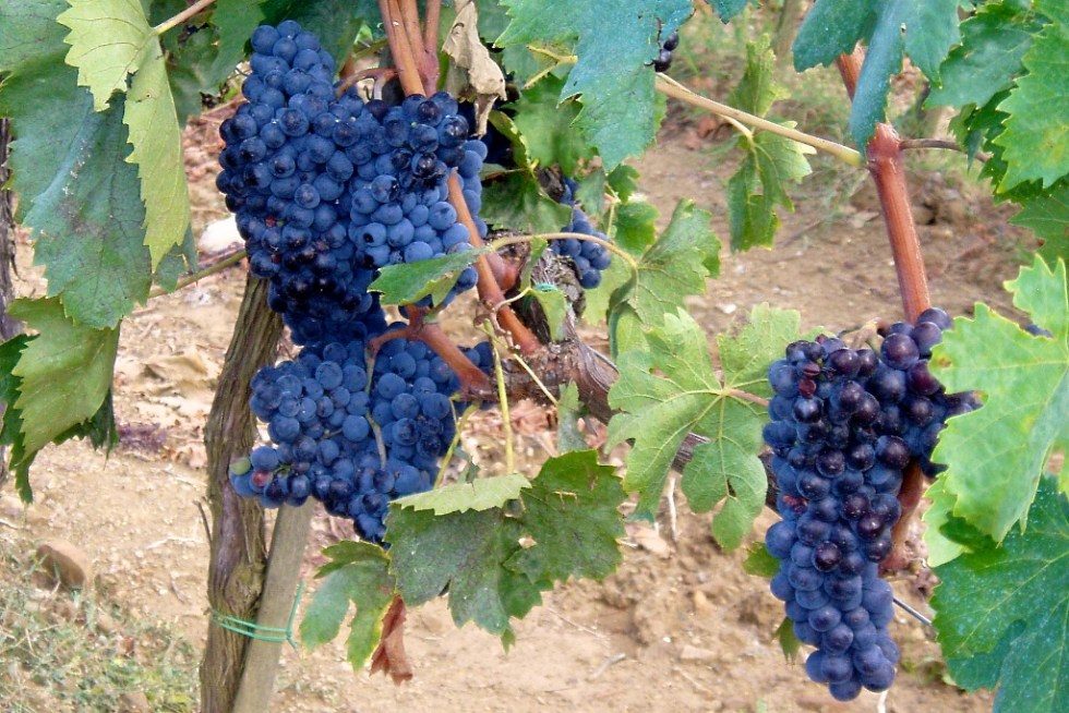 Flavor of Italy Day Tours from Rome - Montalcino