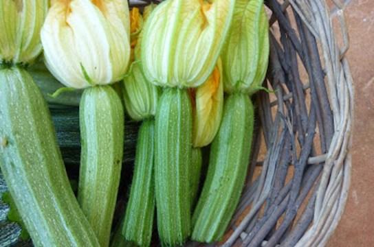 Garden fresh summer Zucchini