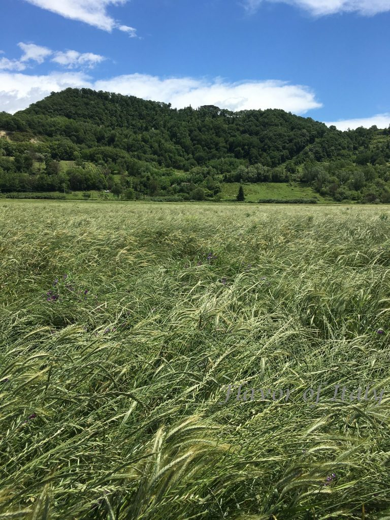 An Umbrian field is a great hiking spot