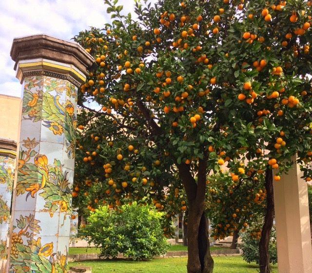 Orange trees at Santa Chiara, Naples