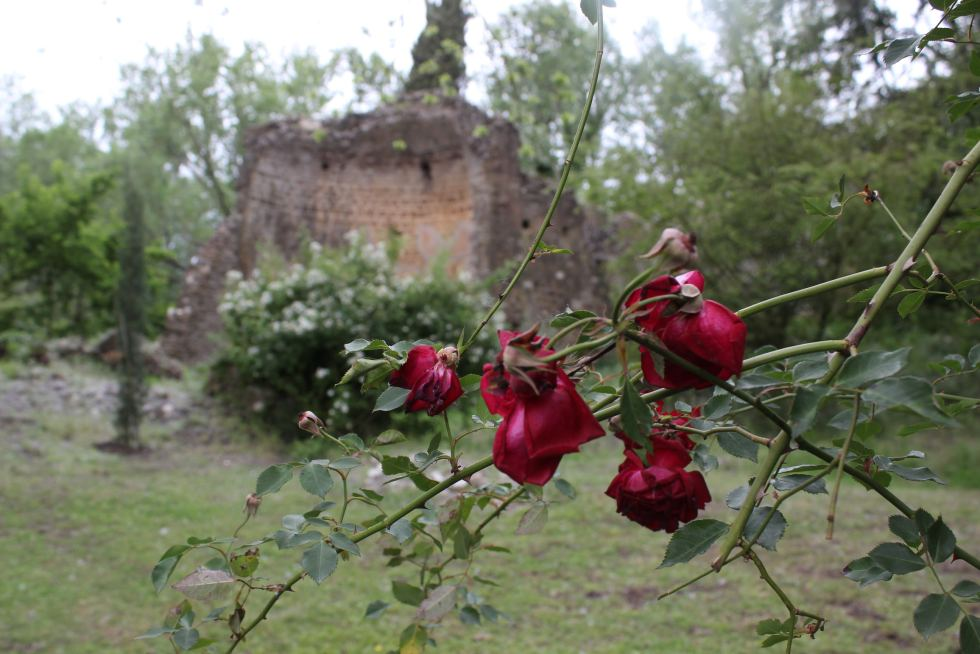 Red roses and ruins Ninfa Gardens