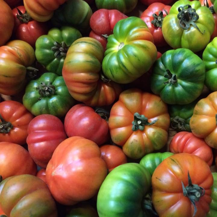 Tomatoes for Bread and Tomato Appetizer drizzled with olive oil