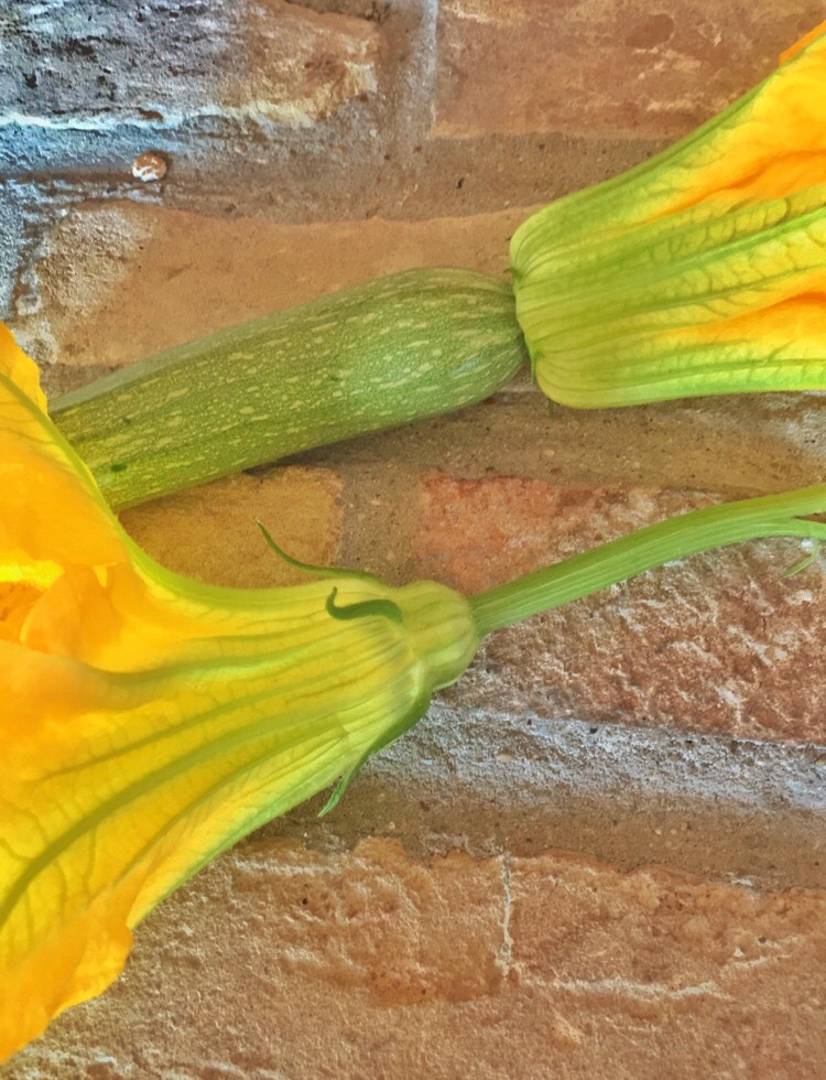 Male and female zucchini flowers used to make deep fried zucchini flowers