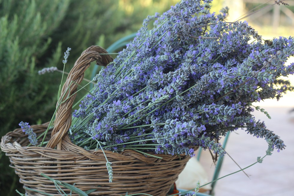 Freshly harvested lavender for Lemon Lavender Cake