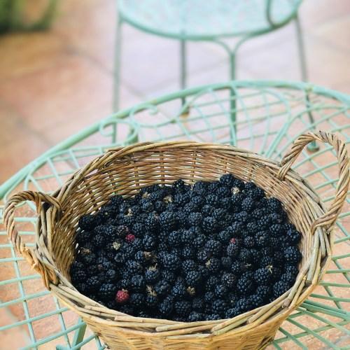 Freshly picked blackberries for blackberry jam