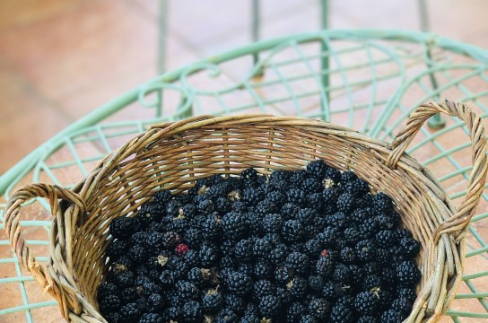 Freshly picked blackberries for blackberry jam