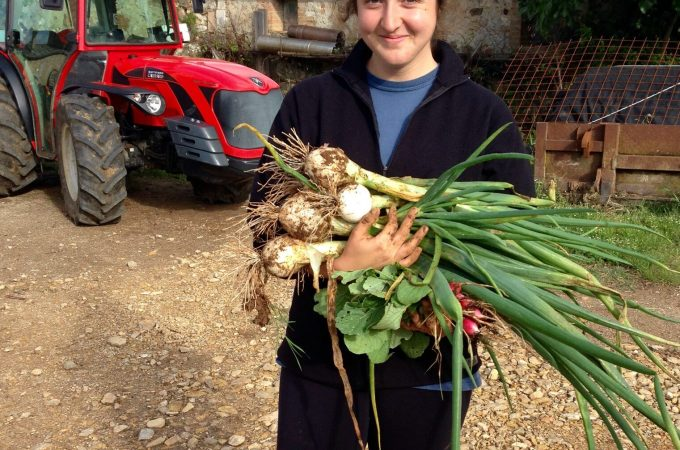 intern gathering produce from the organic vegetable garden