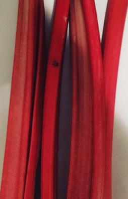 Rhubarb stalks!