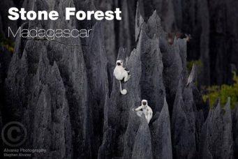 https://i0.wp.com/flavorverse.com/wp-content/uploads/2014/04/stoneforest.jpg?resize=341%2C228