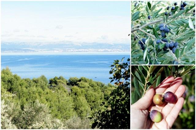 collage-olivenernte-4