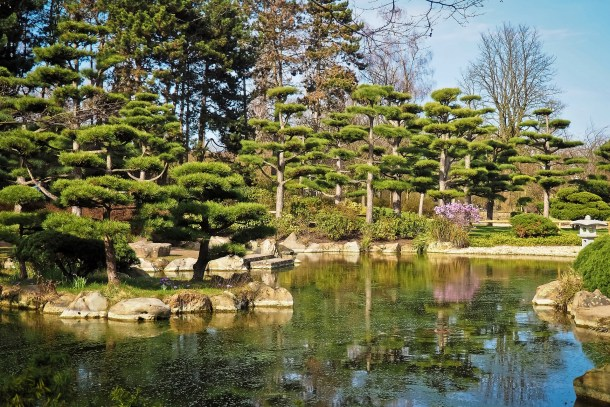 A zen meditation garden with a small lake surrounded by bonsai trees and other green plants