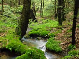 Bosque con río.